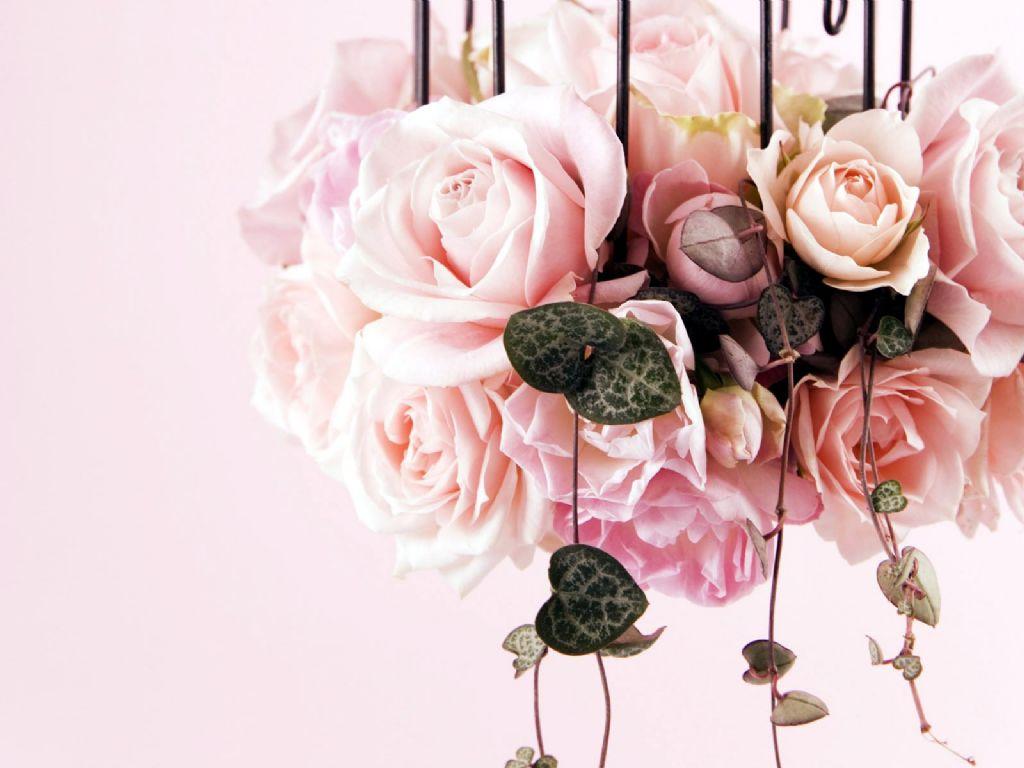 http://1.bp.blogspot.com/-iTX4Q_H6xk4/TWFLm6XPicI/AAAAAAAAAaI/rZqjHEE-W3k/s1600/hanging+rose.jpg