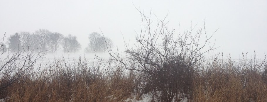 snowy field image