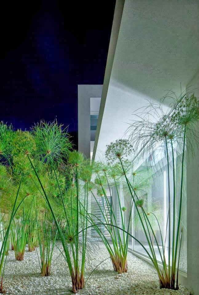 Plants in White Ramat Hasharon House by Pitsou Kedem Architects