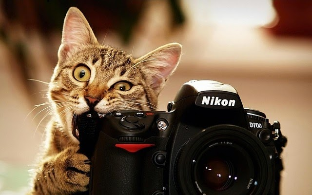 avatar mèo con dễ thương nhất