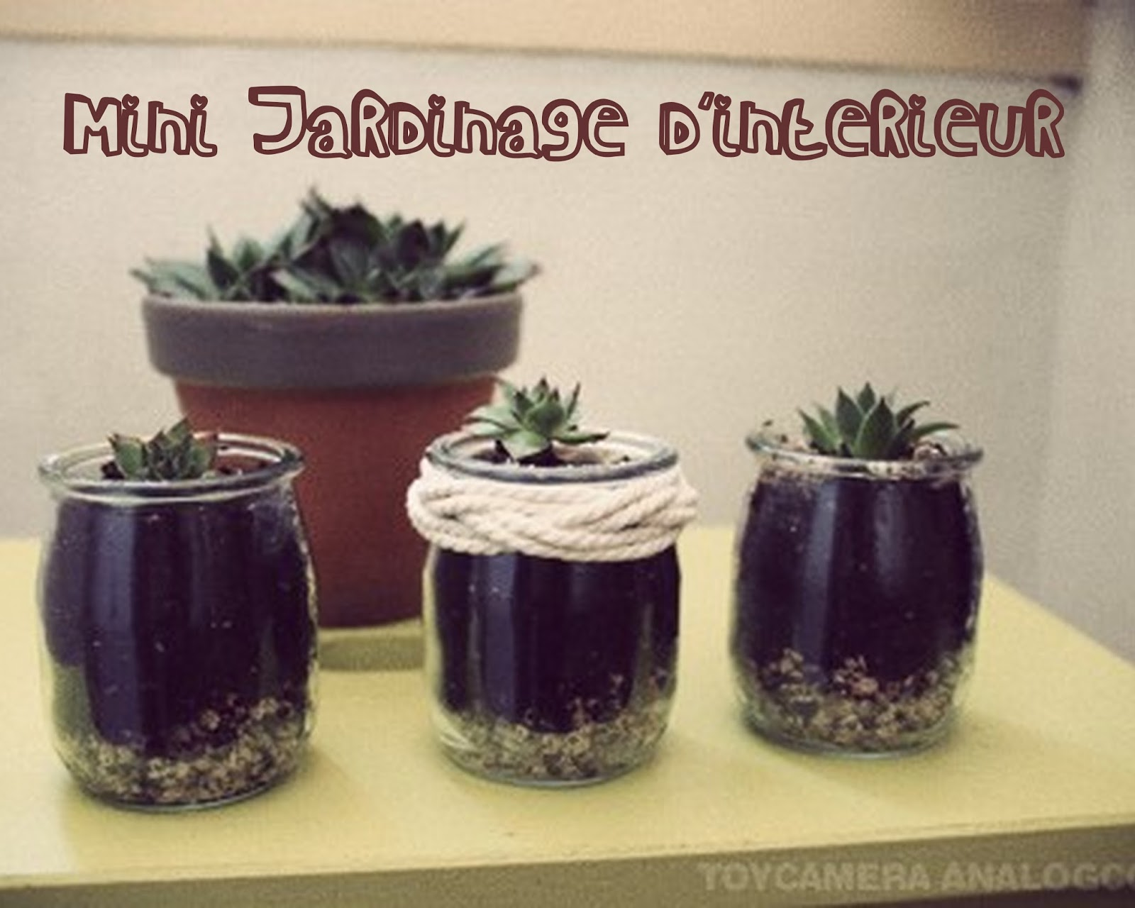 Mandy bla bla mini jardinage d 39 int rieur for Jardinage d interieur