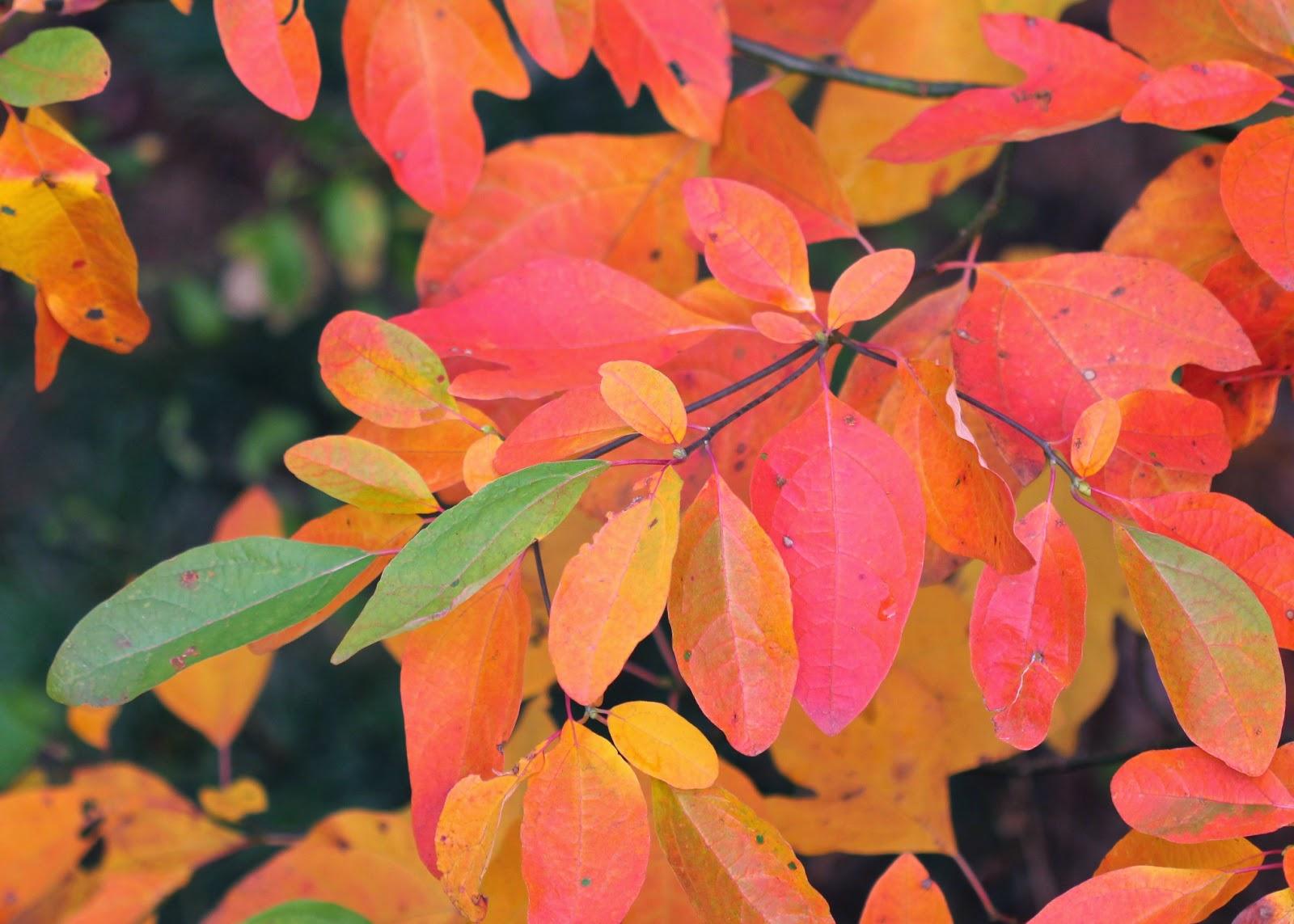 Red House Garden: Four Seasons of Sassafras