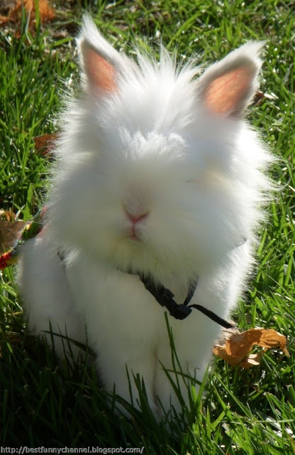Fluffy bunny.