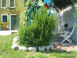 Rośliny poprawiające humor – co mieć w ogrodzie