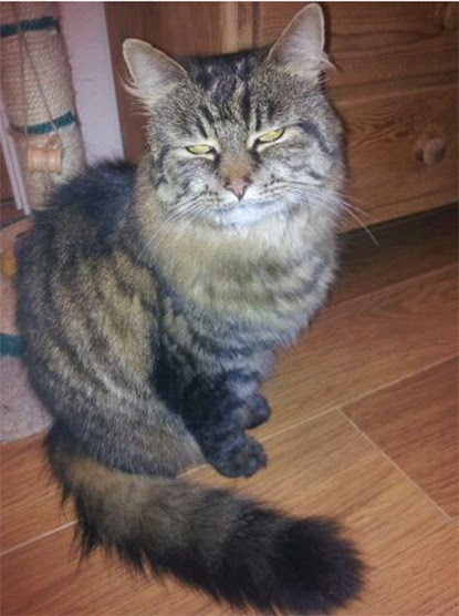 Tabby cat Alice has been reunited with her owners thanks to her microchip
