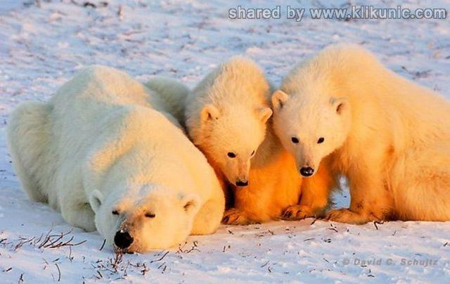 http://1.bp.blogspot.com/-iV5LDgQVLS8/TXWDzo7z5NI/AAAAAAAAQME/BSv0i9oMXa8/s1600/these_funny_animals_632_640_13.jpg