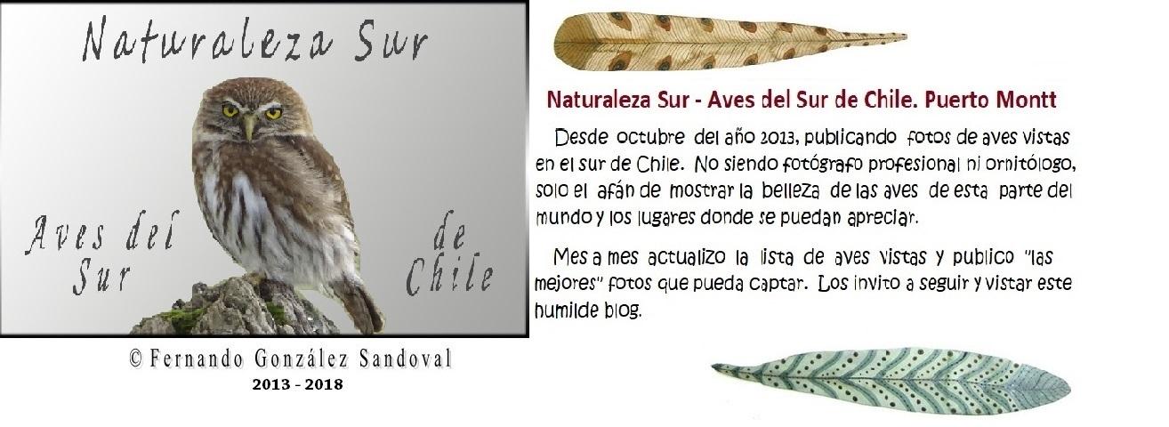 Naturaleza Sur - Aves del sur de Chile. Puerto Montt