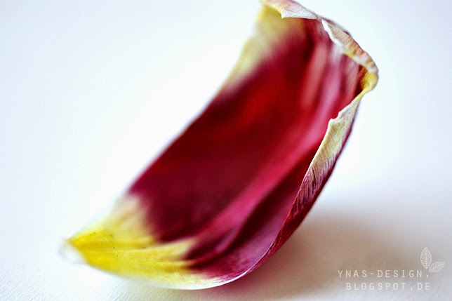 Ynas Design Blog, Makro Tulpenblätter