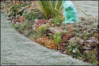 Un giardino di perenni in ticino pacciamatura for Aiuole perenni