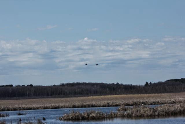 wetlands, water, clean air