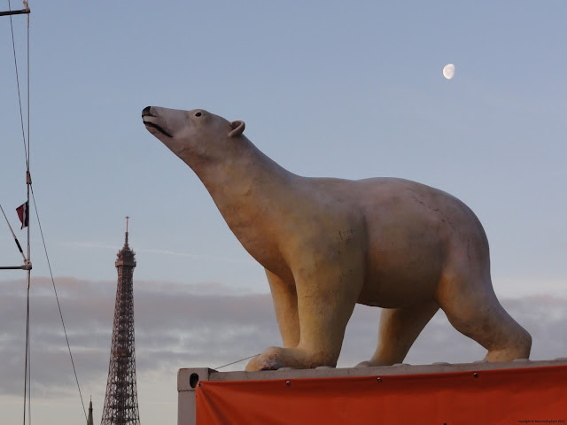 Tara's bear on the river Seine
