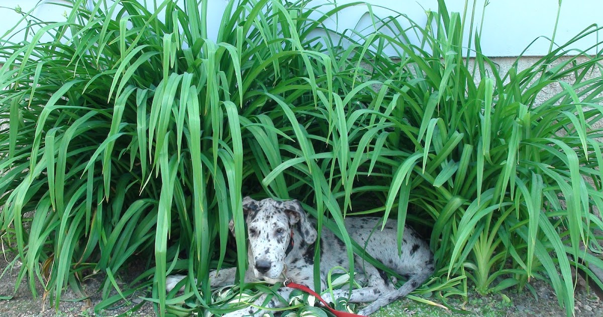 Alternative To Eating Grass For Dogs