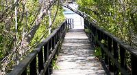 Wooden Walkway to Concho de Perla, Isabela Island, Galapagos
