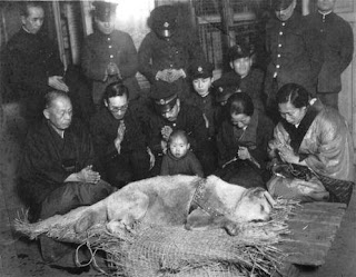 last photo of Hachiko