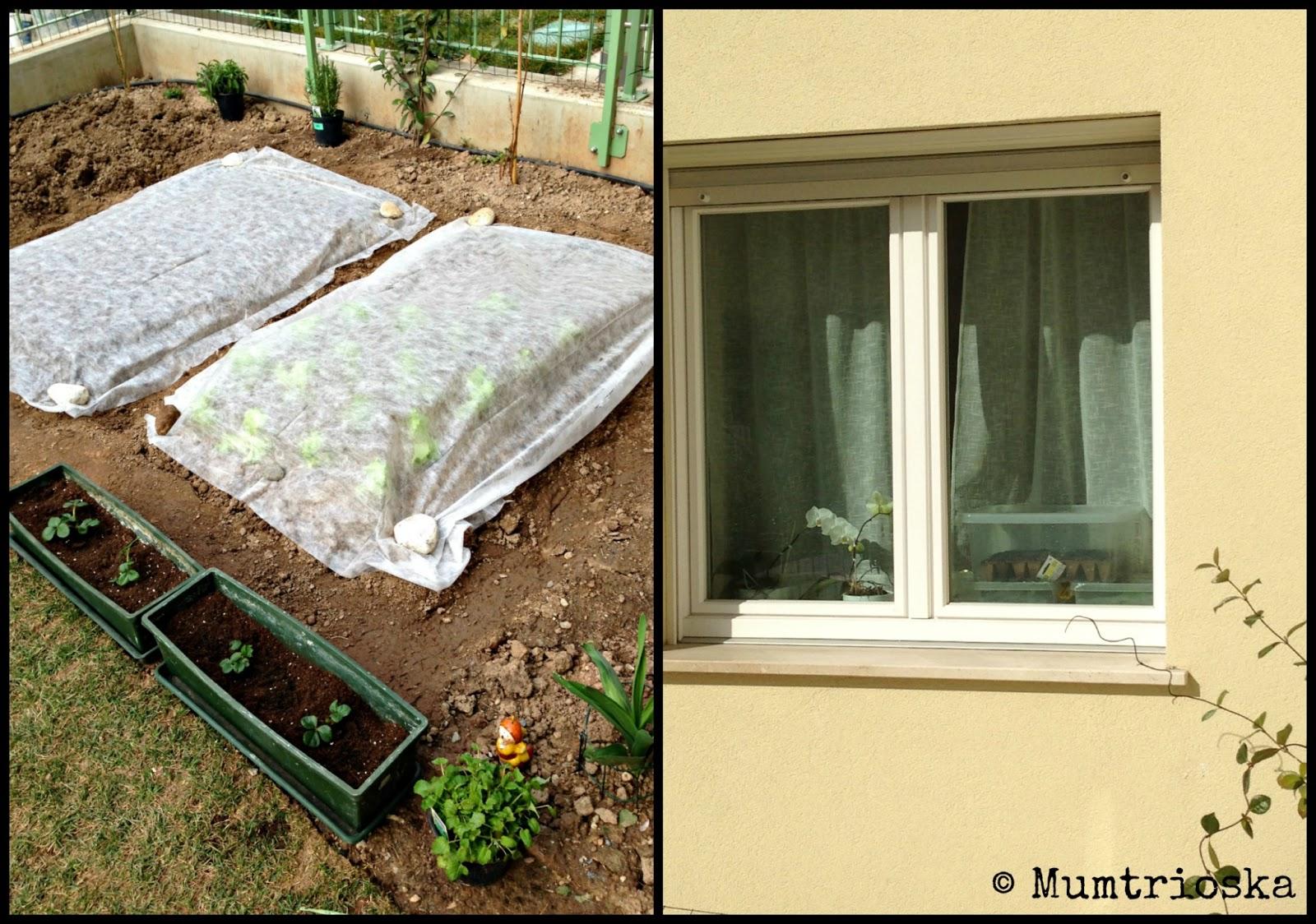 Mumtrioska Orto In Giardino Semine E Trapianti Orto