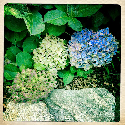 Autumn's faded hues / at season's end replacing / Summer's brilliant blues. // haiku - micropoetry - haikumages
