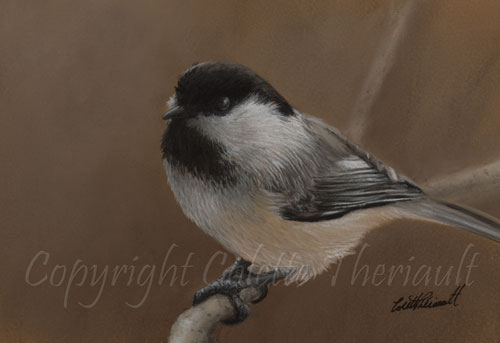 Black capped chickadee painting in pastel by avian artist Colette Theriault