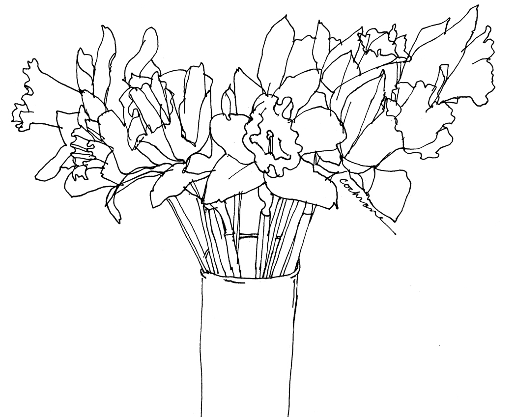 Line Drawing Daffodil : Draw from life dominick s daffodils