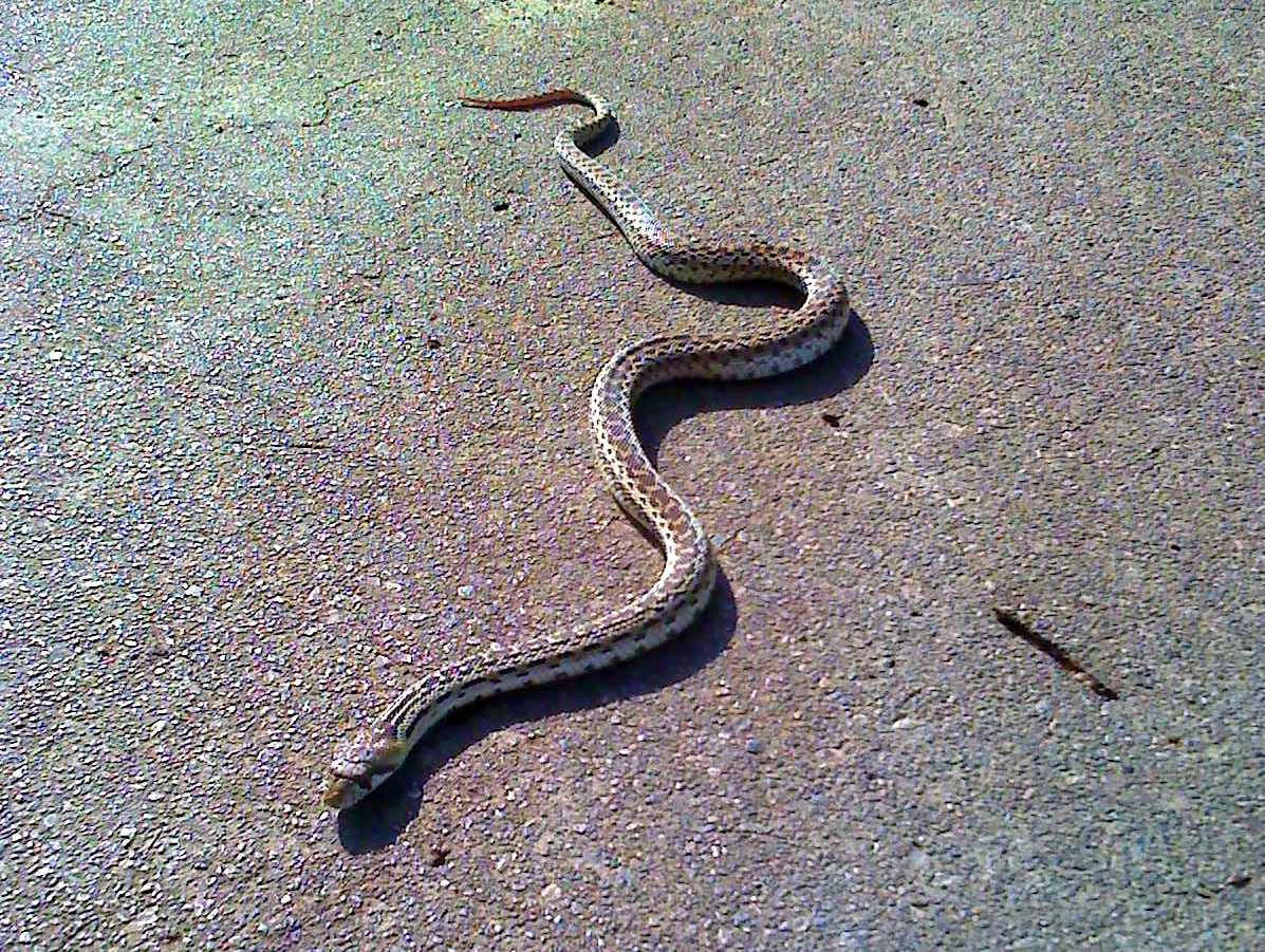 Pictures Of Baby Garden Snakes My Site