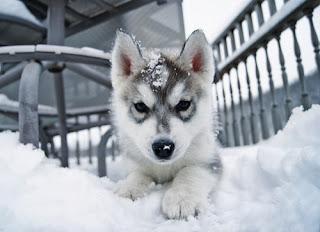Psiaki i śnieg- cudowne połączenie