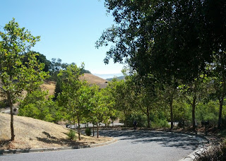 Winding section of Arnerich Road, Los Gatos, CA