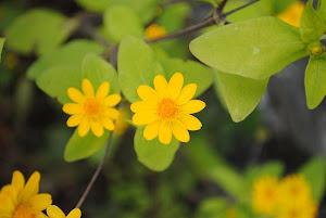 東京 不動産 Blogの花