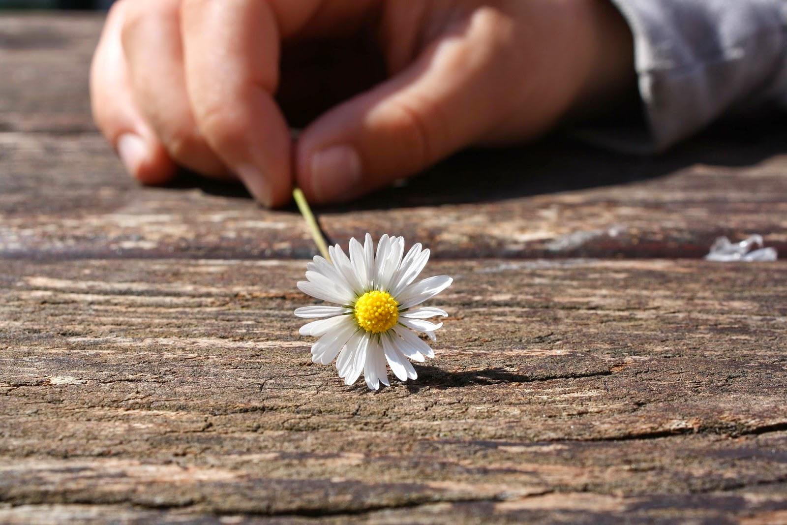 madera y flor