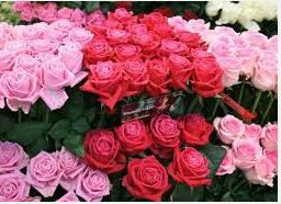 Bunga Mawar Bermanfaat Untuk Kesehatan Dan Kecantikan
