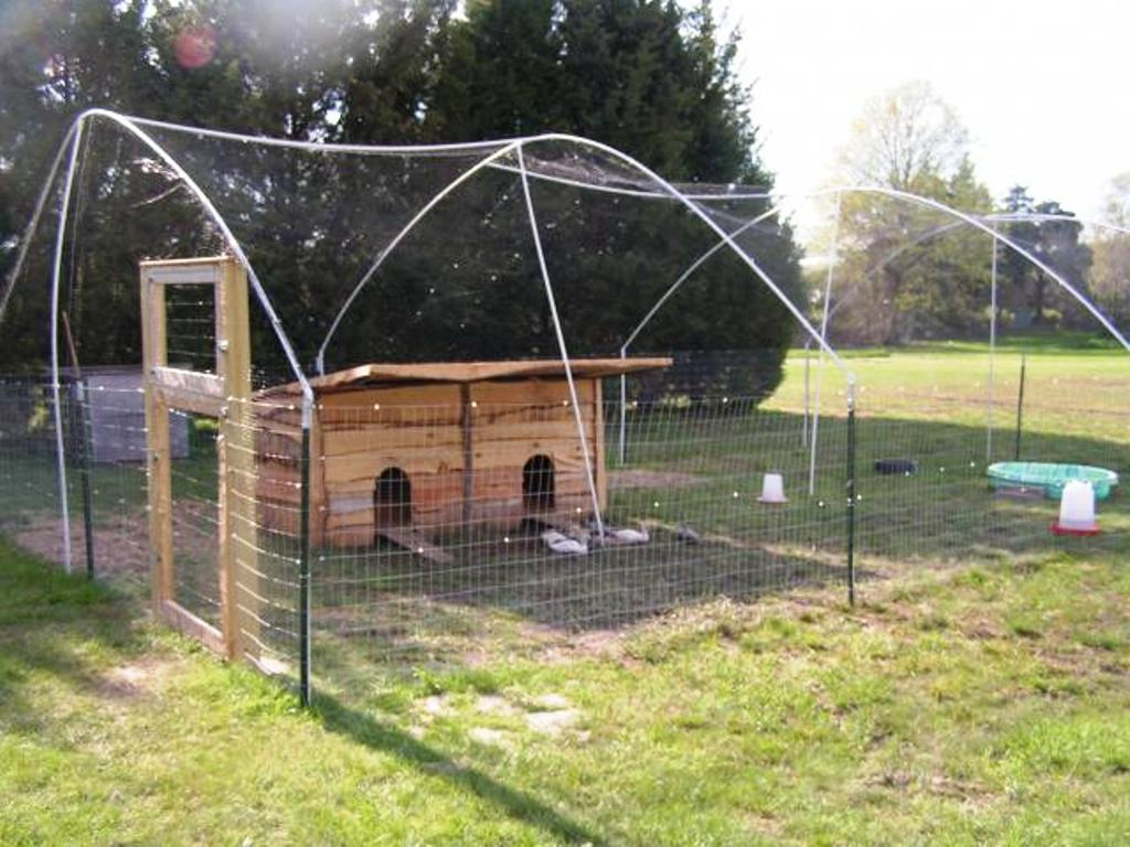 Animals and birds galaxy birds coops house for Building a duck pen