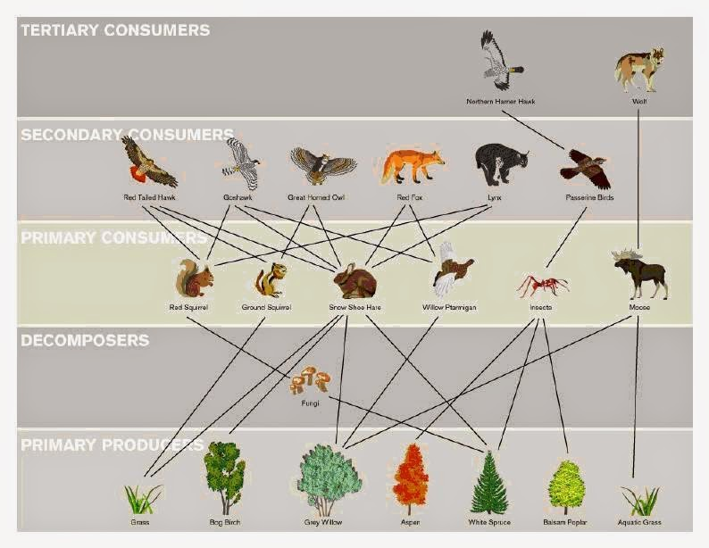 Rm 31 corp food webs of interest for Alaskan cuisine history