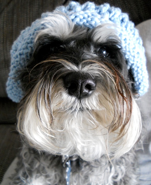 Robin's dog, Schnapps!