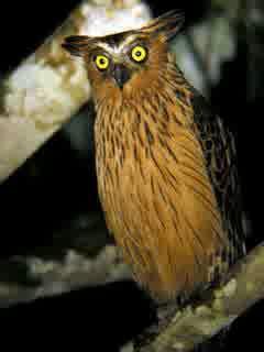 fish owl store, fish and owl canyon utah map, javan fish owl, sister phantom owl fish rar, fish owl canyon, floppy fish owl city mp3, jeremy fish owl, buffy fish owl pasir ris, fish owl clothing, fish and owl canyon backpacking, jeremy fish owl skull, fish owl store, fish owl facts, malay fish owl diet, jeremy fish owl hat, fish owl size, fish owl pictures, buffy fish owl diet, java fish owl, fish owl south africa, fish owl south africa, brown fish owl distribution, buffy fish owl jantan, fish owl sound, fish owl turkey, brown fish owl diet, buffy fish owl jogja, buffy fish owl sound, fish owl of eurasia, jual buffy fish owl di jakarta, brown fish owl (ketupa zeylonensis), brown fish owl sound, fish owl africa, buffy fish owl dijual, moki blakiston's fish owl knife, buffy fish owl singapore, fish owl sound, buffy fish owl dilindungi, buffy fish owl kaskus, buffy fish owl surabaya, fish owl store, fish eating owl, moki fish owl large, brown fish owl sri lanka, fish owl size, fish eagle owl, fish owl creek loop, blakiston's fish owl sound, fish owl canyon, fish owl of eurasia, blakiston's fish owl lifespan, blakiston's fish owl, fish owl clothing, blakiston's fish owl endangered, buffy fish owl lifespan, moki blakiston s fish owl, fish owl facts, blakiston's fish owl of eurasia, fish and owl loop utah, fish owl turkey, fish owl pictures, eurasian fish owl, brown fish owl sri lanka, owl fish tank, fish owl south africa, what does a fish owl eat, largest fish owl, brown fish owl turkey, fish owl, fish owl facts, buffy fish owl male, brown fish owl tours, fish owl turkey, buffy fish owl facts, fish owl canyon map, brown fish owl turkey 2013, fish owl of eurasia, blakiston's fish owl facts, moki fish owl, brown fish owl trips, fish owl africa, brown fish owl facts, malay fish owl, tawny fish owl, fish and owl canyon utah, malay fish owl facts, moki fish owl large, tawny fish owl facts, fish and owl, tawny fish owl facts, malay fish owl facts, tawny fish owl sound, fish an