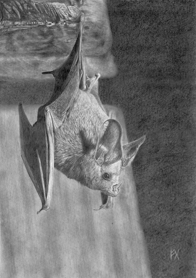 realistic animal drawings 2013