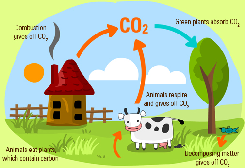 how to explain the carbon cycle