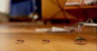 Propaganda da Philco em 1995 com formigas divertindo com a potência do aparelho de som.