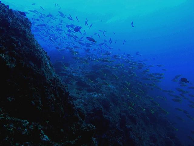اجمل جزر ماليزيا