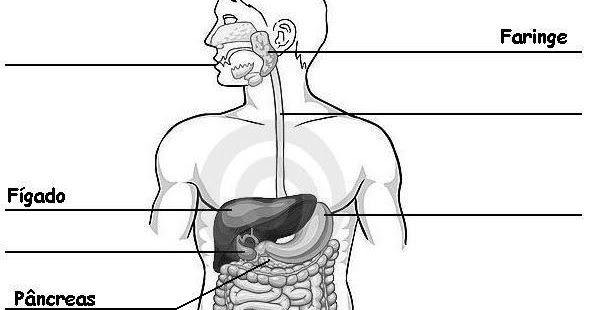 dicas e fazer passo a passo sistema digestório exercícios com gabarito