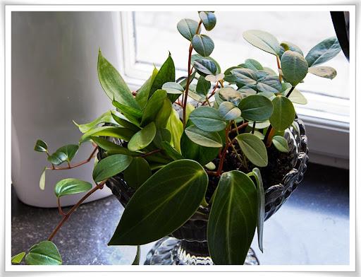Blandade växter i glasskål, bild 2