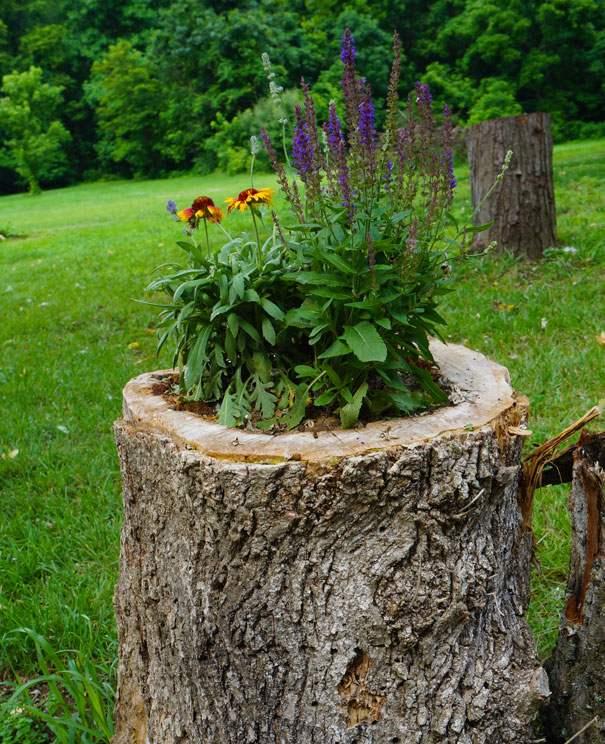 souche darbre,planteur jardin,idées vielles souches darbre,idées ...