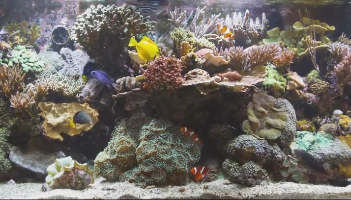 Скачать аквариум своими руками фото 609
