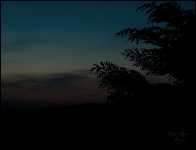 Landschaftaufnahme zur blauen Stunde