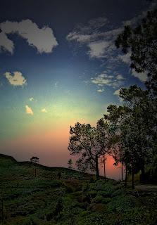 Langit indah di perkebunan teh (Cikajang,Garut)