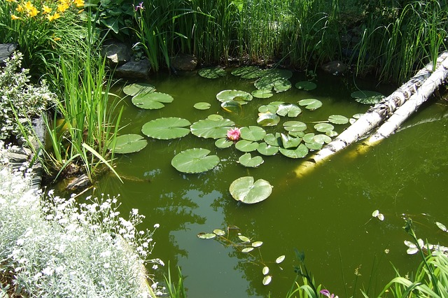 bassin avec nénuphars