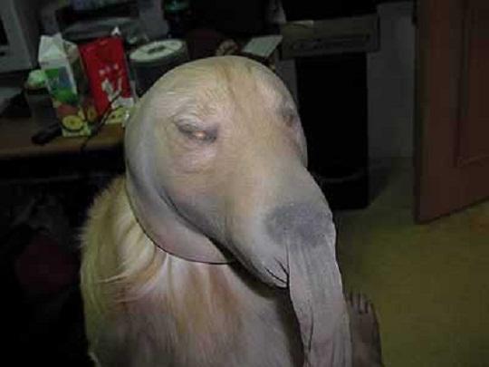 funny dog pose