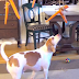 Com carrossel de cenoura, cão fica muito entretido (muito mesmo!)