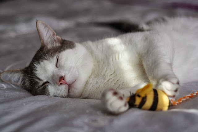 sleeps with bees by splityarn from flickr (CC-NC-SA)