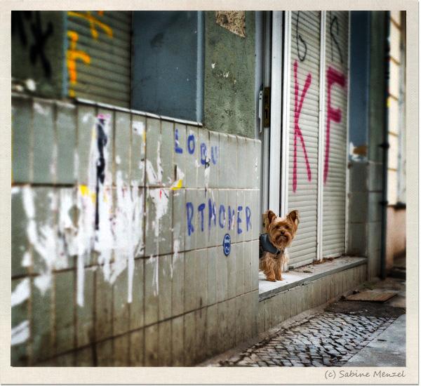 Psynopsis Dog Berlin Neukoelln