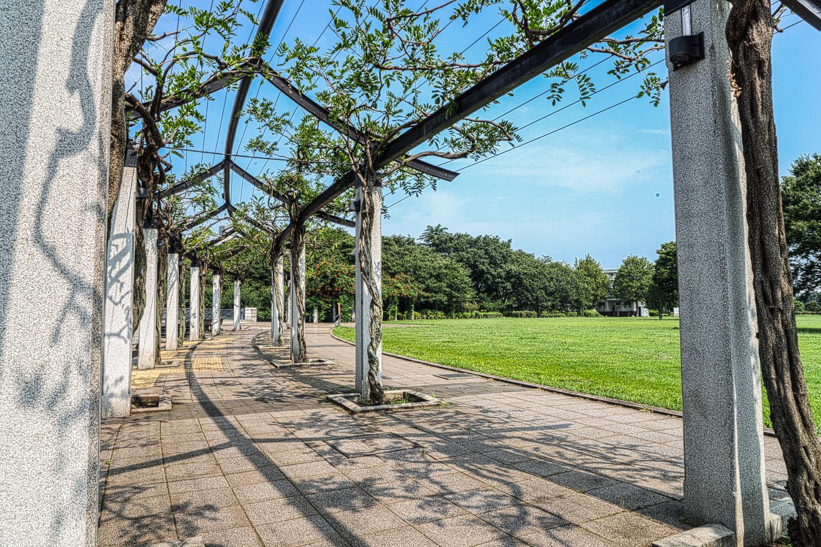 武蔵国分寺、円形の遊歩道の写真