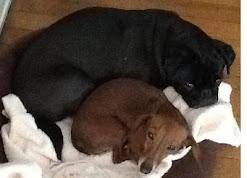 Stewie and Annie