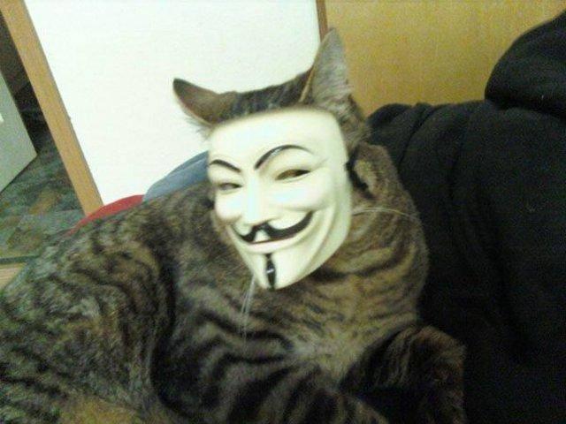 Кот-анонимус
